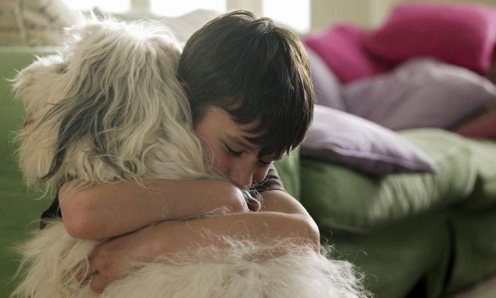 Tenir un animal no és tenir una joguina i cal responsabilitat de part de totho,