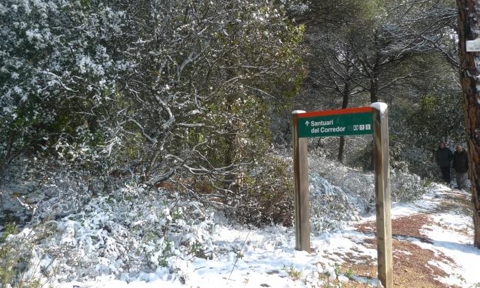 Nevada al Parc Natural de Montnegre-Corredor. Foto: R. G.