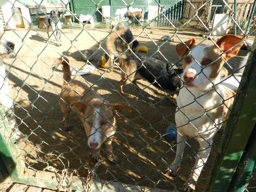 Gossos a Cal Pilé. Foto: Ajuntament de Mataró