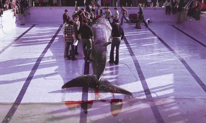 """""""El viatge de la balena de Mataró"""""""