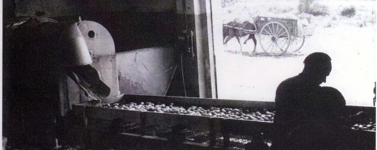 """""""Mataró Potatoes. El temps de la patata al Maresme"""""""