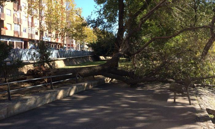 Arbre caigut al parc de Cerdanyola en un temporal anterior. Foto: Cedida