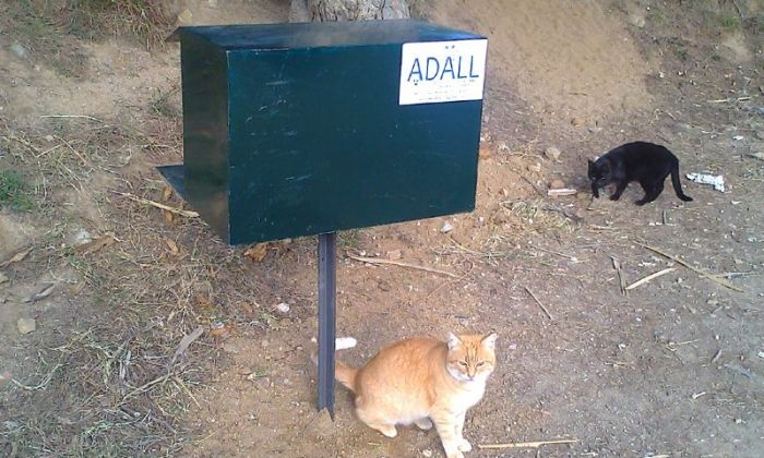Menjadora per a gats a una colonia controlada de Llavaneres