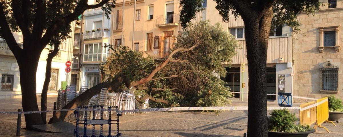 Arbre caigut a la plaça de l'Ajuntament / Foto: Capgròs