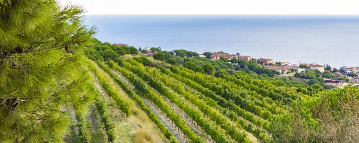 Una vista d'Alella. Foto: iStock