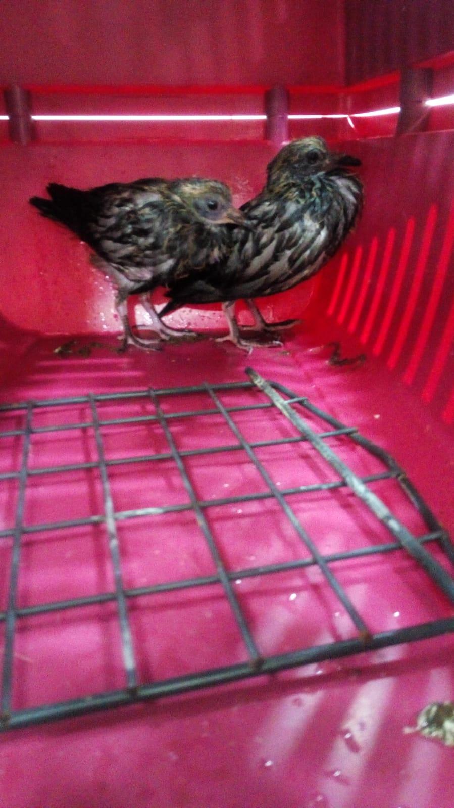 Foto: SOS Animals Maresme