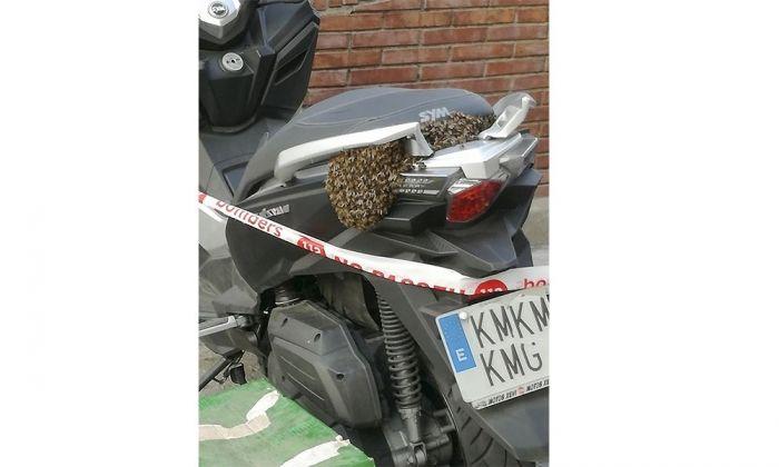 Rusc d'abelles a la motocicleta. Foto: cedida