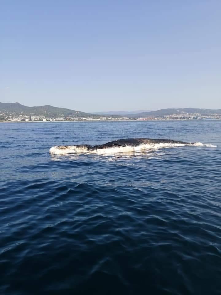 La balena / Font: Cerdanyola Directo/ DC