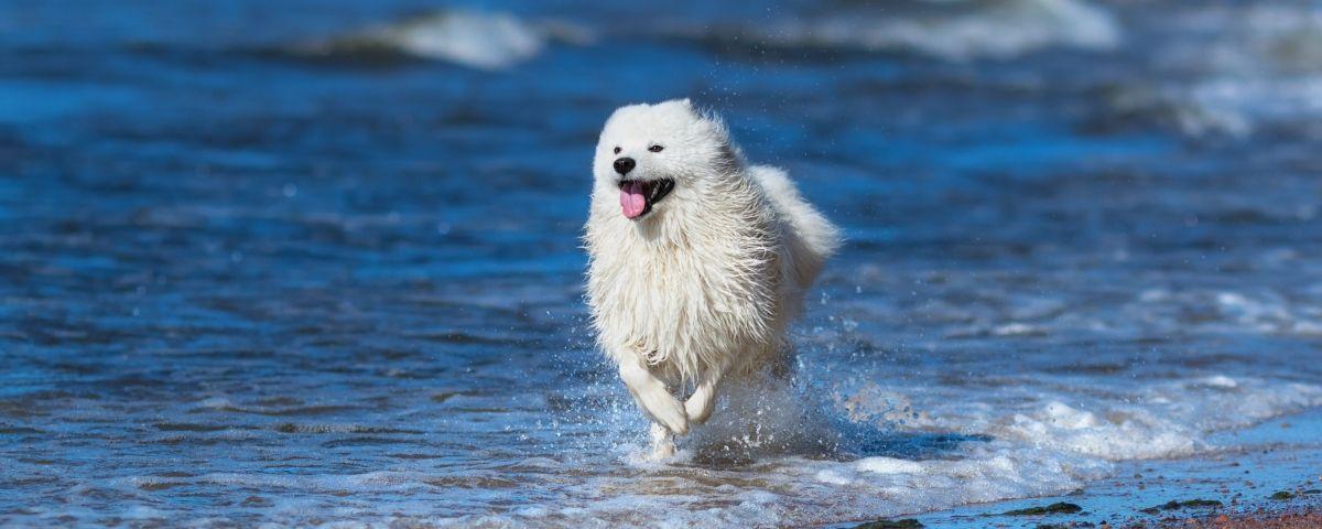Un gos corrent a pet d'ones. Foto: Arxiu