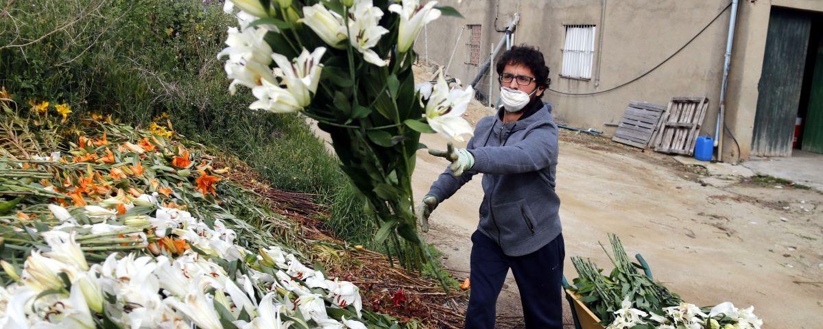 Un viverista llançant part de la producció al femer. Foto: ACN