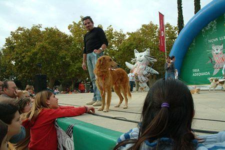 La festa va acollir exhibicions de gossos de treball i d'agility.